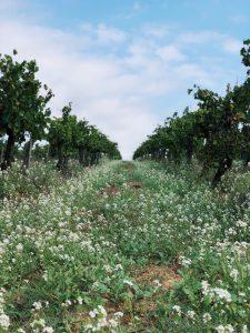 Biodynamische wijngaard Castell d'Age